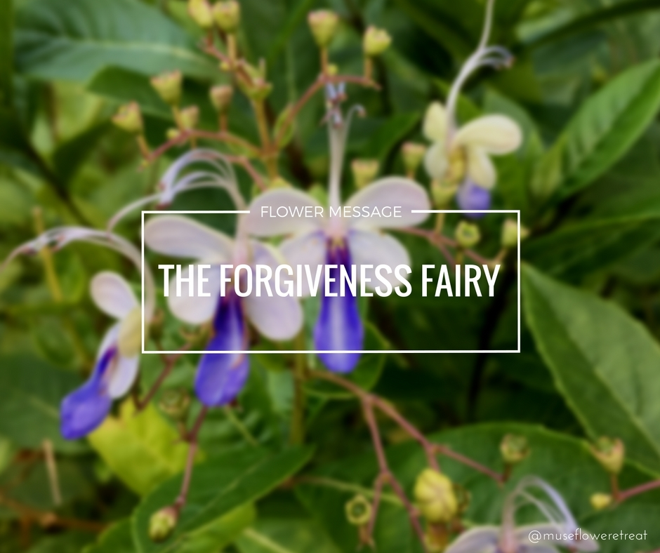 1 Museflower Retreat And Spa Blue Glory Flower Message Forgiveness Fairy Cover