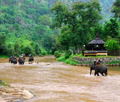 Chiang Rai Attraction Elephant Trekking Tour Museflower Retreat & Spa